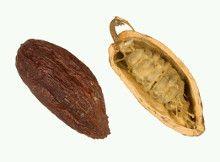 Semilla abierta de cacao